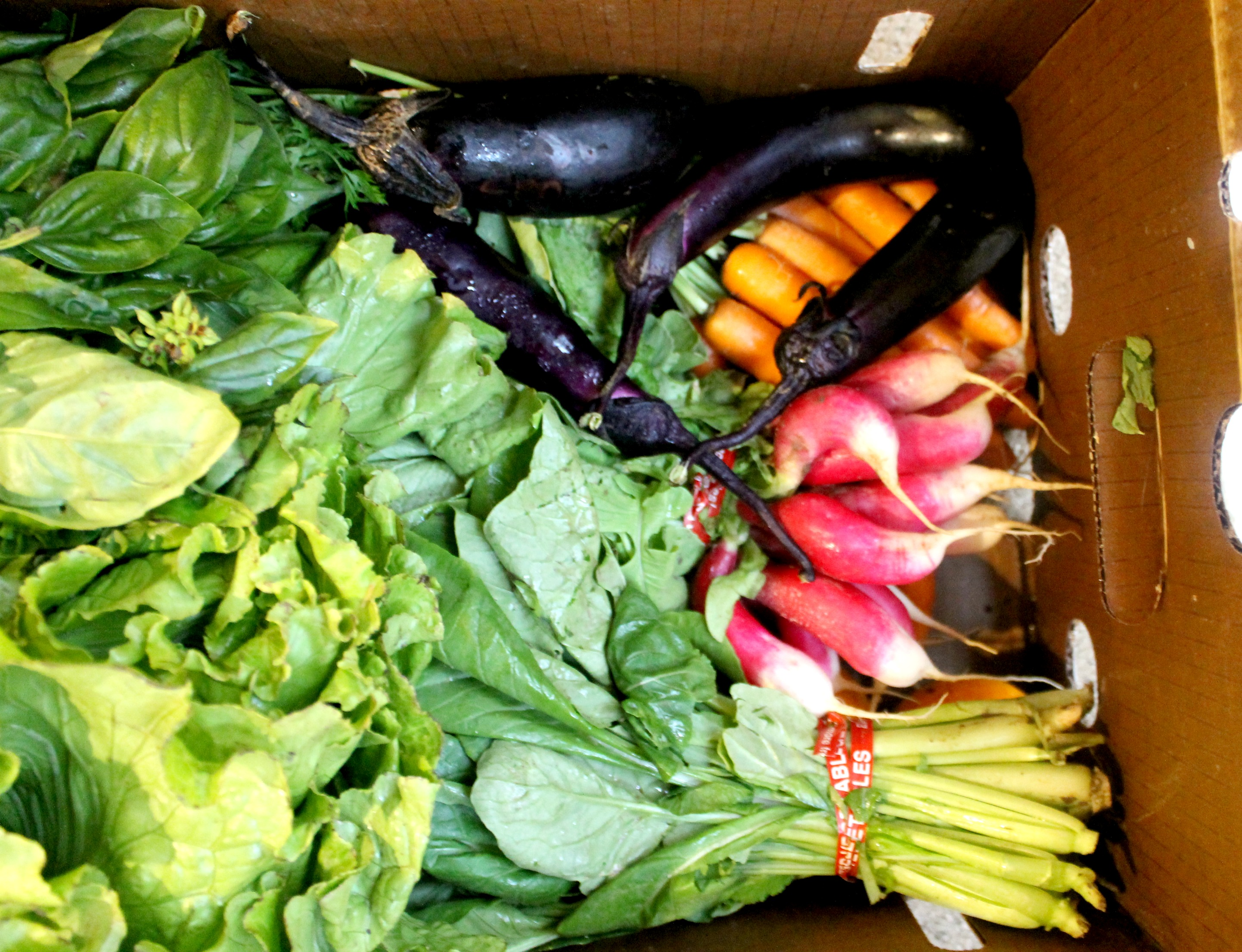 winder farms csa box1