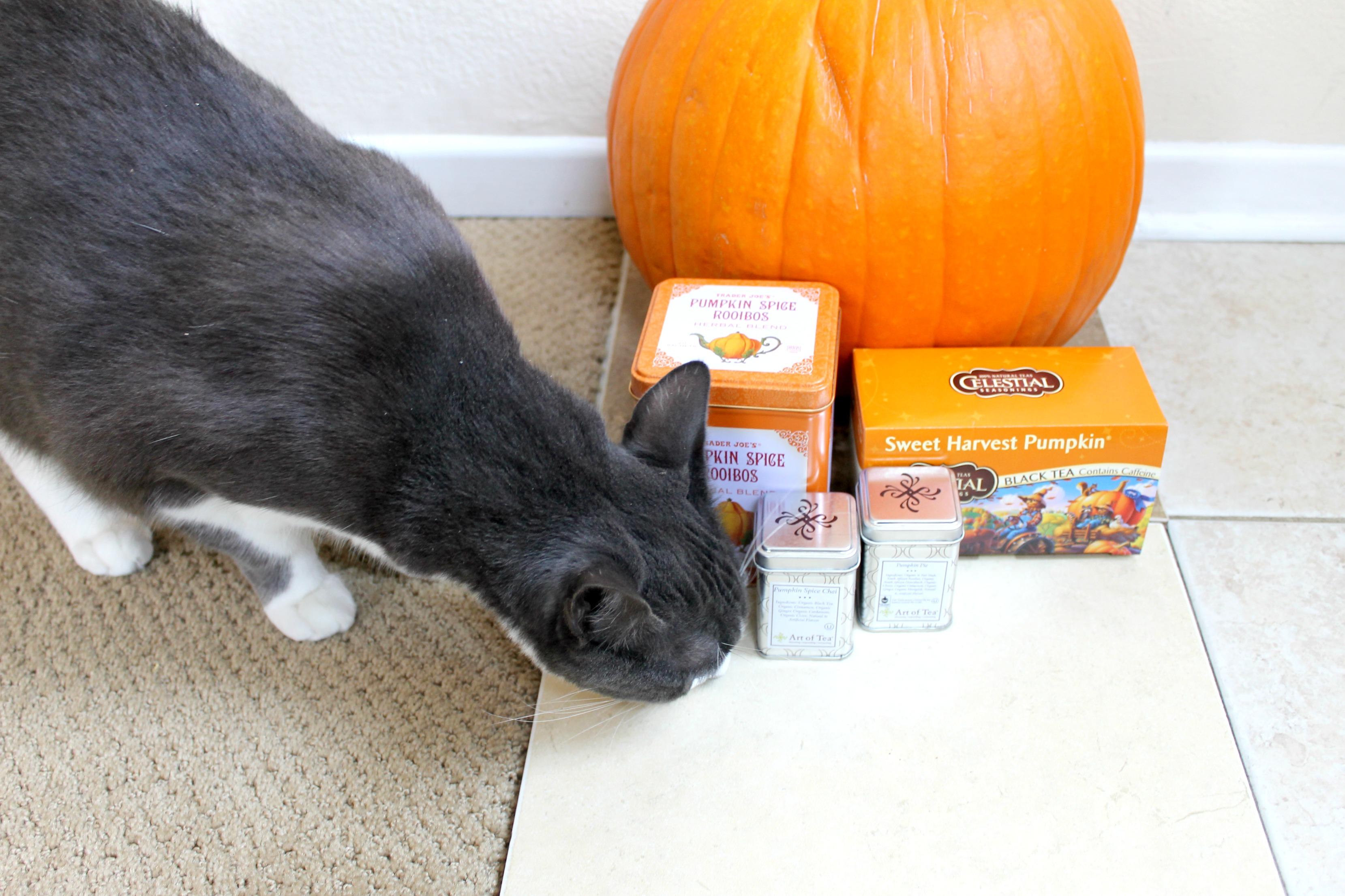 Pumpkin Tea pip photobomb