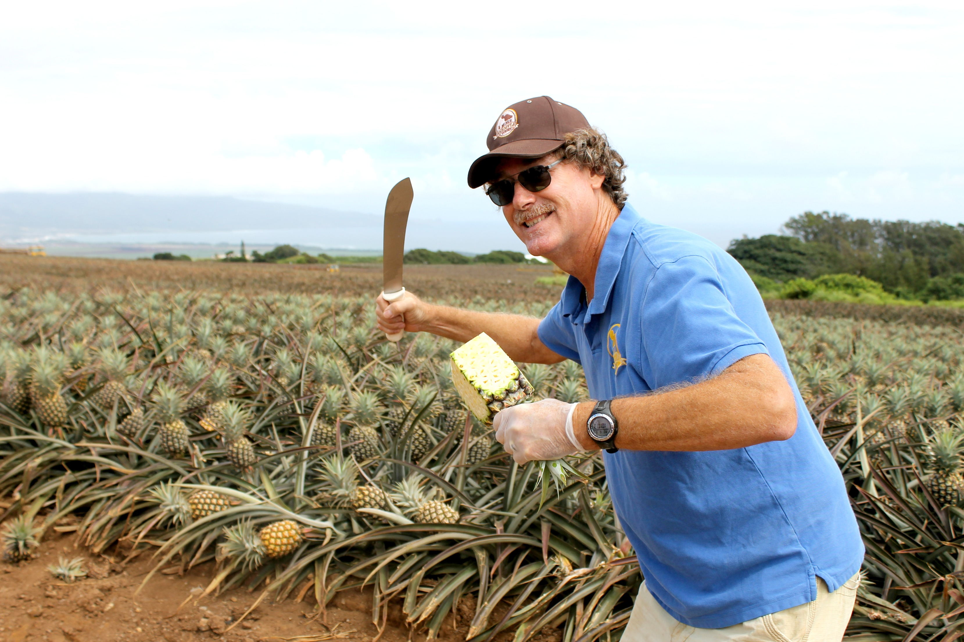 Maui Pineapple Tour Guide